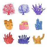 Différents types de récif tropical Coral Collection Image stock