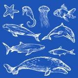 Différents types tirés par la main d'animaux de mer Photographie stock libre de droits