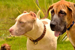 Difference breed couple friend Royalty Free Stock Images