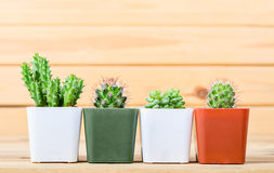 The difference cactus in pot. The difference cactus in pot on wooden background Stock Photography