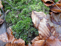 Difference. Conceptual old dry leaves and fresh moss Royalty Free Stock Photo