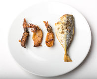 The difference between fish and squid Royalty Free Stock Photo