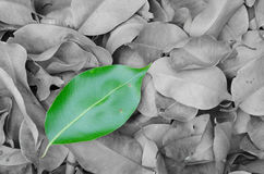 The difference of nature. Leaves which are colored differently from the group Stock Image
