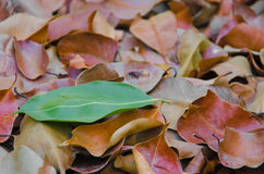The difference of nature. Leaves which are colored differently from the group Royalty Free Stock Images