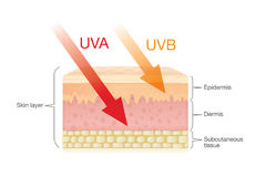The difference of radiation types in sunlight with skin. The difference of radiation types in sunlight which is harmful to the skin.Illustration about UVA royalty free illustration