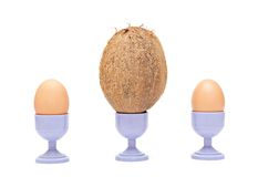 Difference of tastes. Coco and two chicken eggs on supports for eggs Royalty Free Stock Photography