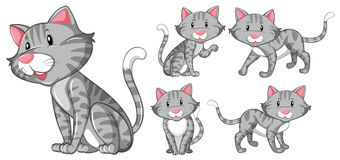 Different actions of gray cat. Illustration Royalty Free Stock Images