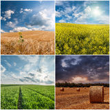 Different Agricultural Landscapes Royalty Free Stock Image
