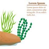 Different algae cartoon illustration. Illustration of cartoon algae of different shapes Stock Images