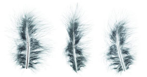 Different angles of the Ostrich dark green feathers collection Stock Image