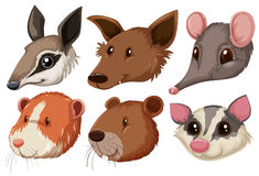 Different animal heads on white background. Illustration Royalty Free Stock Images
