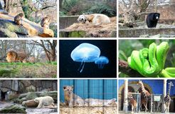 Different animals at the Berlin Zoo Stock Photography