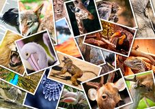 Different animals collage Stock Photos