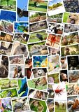 Different animals collage on postcards royalty free stock image