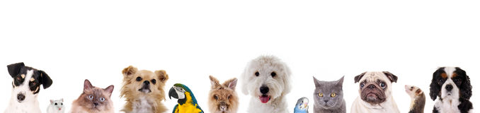 Different animals. Row of different animals and pets Stock Photos