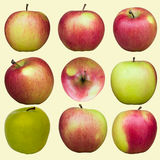 Different apples stock images