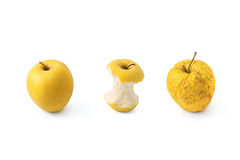 Different apples. Ripe apple, apple core and a dried apple Stock Photography