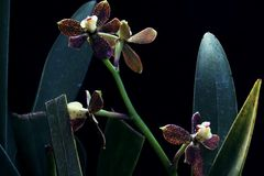 Different arrangement of orchid flowers. Beautiful kind of arrangement of orchid flower royalty free stock photo