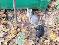 Different autumn cats. In the courtyard walk lie on the leaves stock photos
