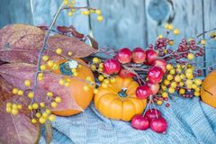 Different autumn fruits and berries. Bright orange mini pumpkins and knitted sweater. Calm autumn still life in the autumn garden. royalty free stock photography