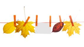 Different autumn leaves and empty card hang on a Stock Photography