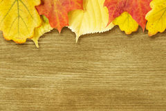 Different autumn leaves opn gold wood plank Stock Image