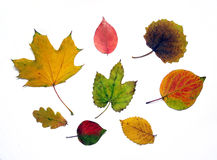 Different autumn leaves Stock Photo