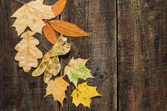 Different autumn leaves on the wooden background Stock Photos