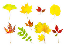 Different Autumn Leaves /  XXLarge size Royalty Free Stock Photo