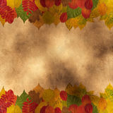 Different autumnal leaves Stock Photo