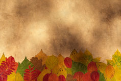 Different autumnal leaves Stock Photos