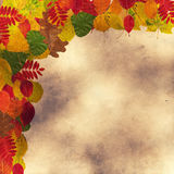Different autumnal leaves Stock Photography