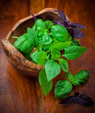 Different basil sorts Royalty Free Stock Image