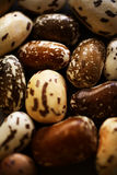 Different beans Royalty Free Stock Photos