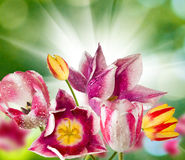 Different beautiful flowers in park closeup Stock Photography