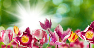 Different beautiful flowers in park closeup Royalty Free Stock Photography