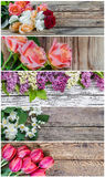 Different Beautiful Flowers Royalty Free Stock Photo
