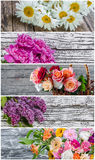 Different Beautiful Flowers Royalty Free Stock Image
