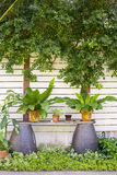 Different beautiful fresh green potted plants in the trendy tropical garden stock image