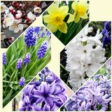 Spring flowers in one photo Royalty Free Stock Image