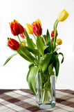 Different beautiful tulips isolated on white background Royalty Free Stock Image