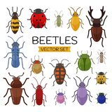 Different beetles on an isolated background. royalty free illustration