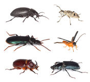 Different beetles isolated on white background. royalty free stock images
