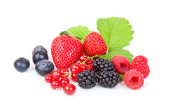 Different berries stock photography