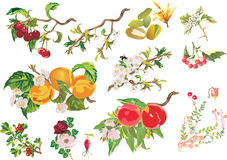 Different berries and flowers Royalty Free Stock Photo