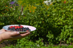 Different berries on a plate Royalty Free Stock Images