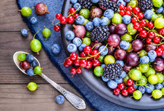 Different berries plate. Royalty Free Stock Photo