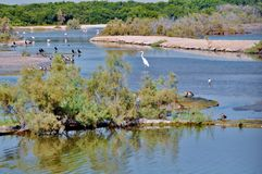 Different bird species showing richness of nature at Ras al Khor. Different bird species resting in the lake pond and on near the trees, showing richness of Royalty Free Stock Photography