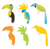 Different Birds Stock Images