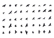Different birds in flight on white background Stock Photo